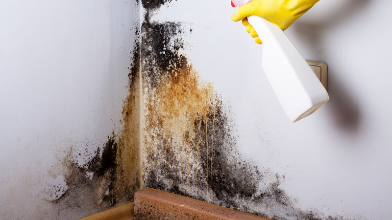 mould-cleaning-removal-remove-professional-product-detergent-mouldy
